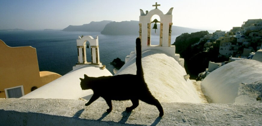 black-cat-on-the-church-roof-870×418 (1)